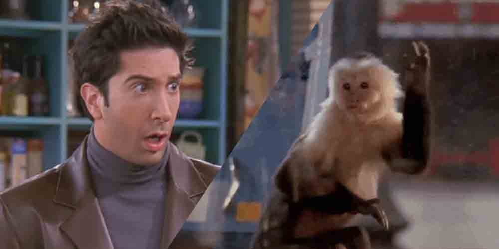 Ross Geller's Marcel The Monkey Was Actually A Girl